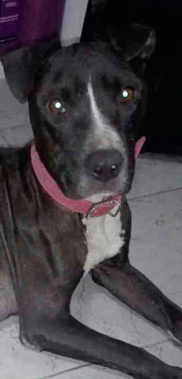 Bella fue rescatada del abandono y busca una casa