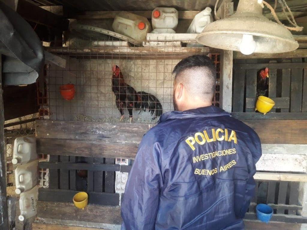 José C. Paz: Allanan un predio donde practicaban riña de gallos: hay 8 detenidos