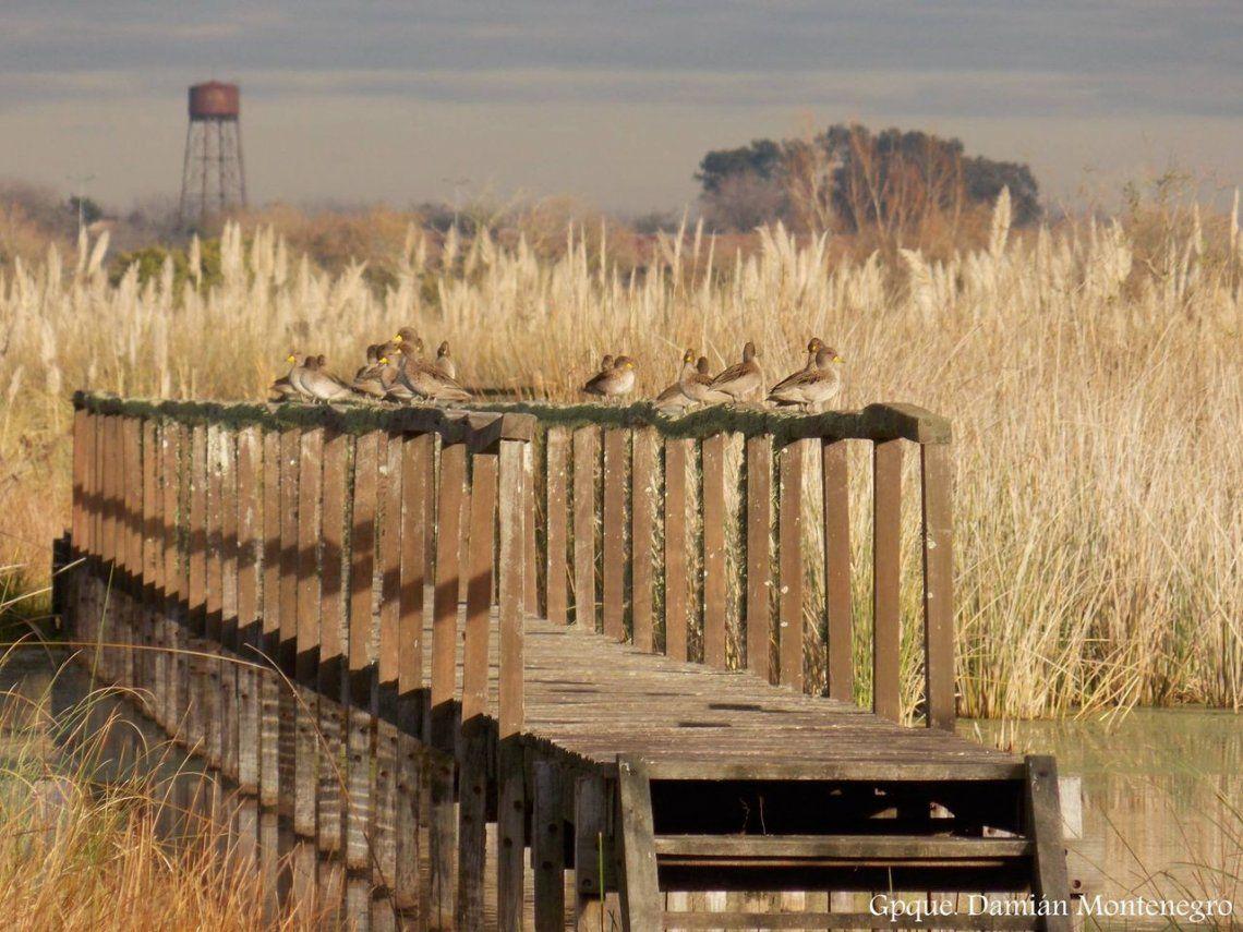 Parque Nacional Ciervo de los Pantanos: aprobaron la creación de un nuevo espacio en Buenos Aires
