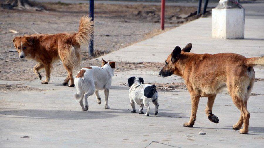 A raíz de la crisis, crece el  abandono de perros y gatos