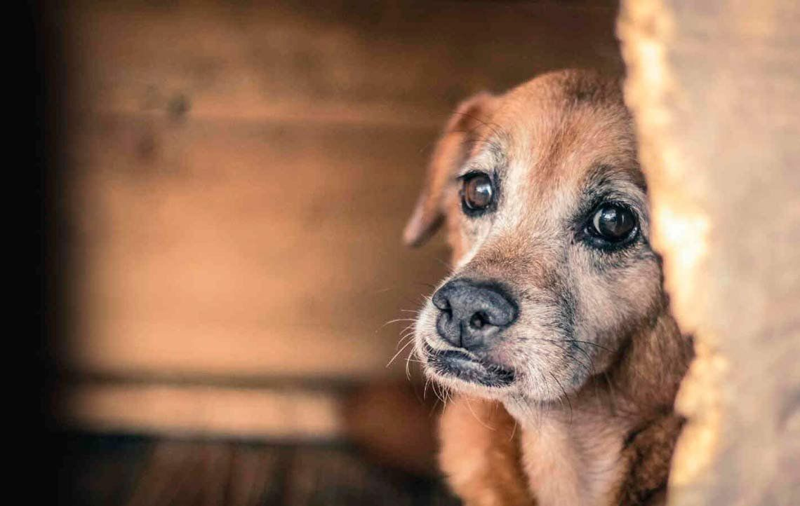 Día Mundial del Perro: el 70 % de los que hay en el mundo no tienen hogar