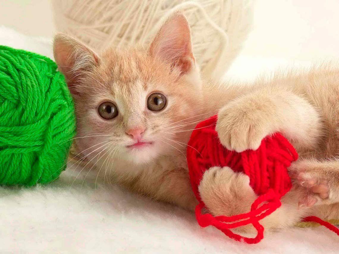 Consejos básicos para que el gato pueda ser feliz en el hogar