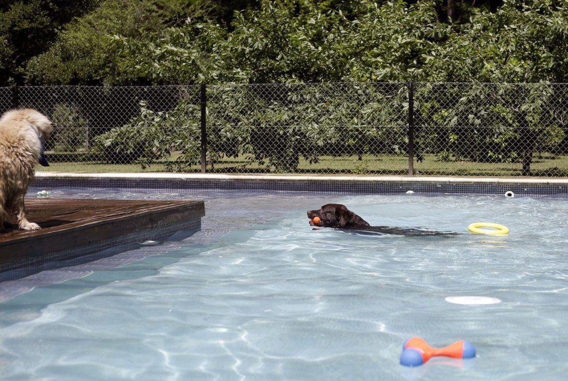 GALERÍA: El primer hotel all inclusive para perros