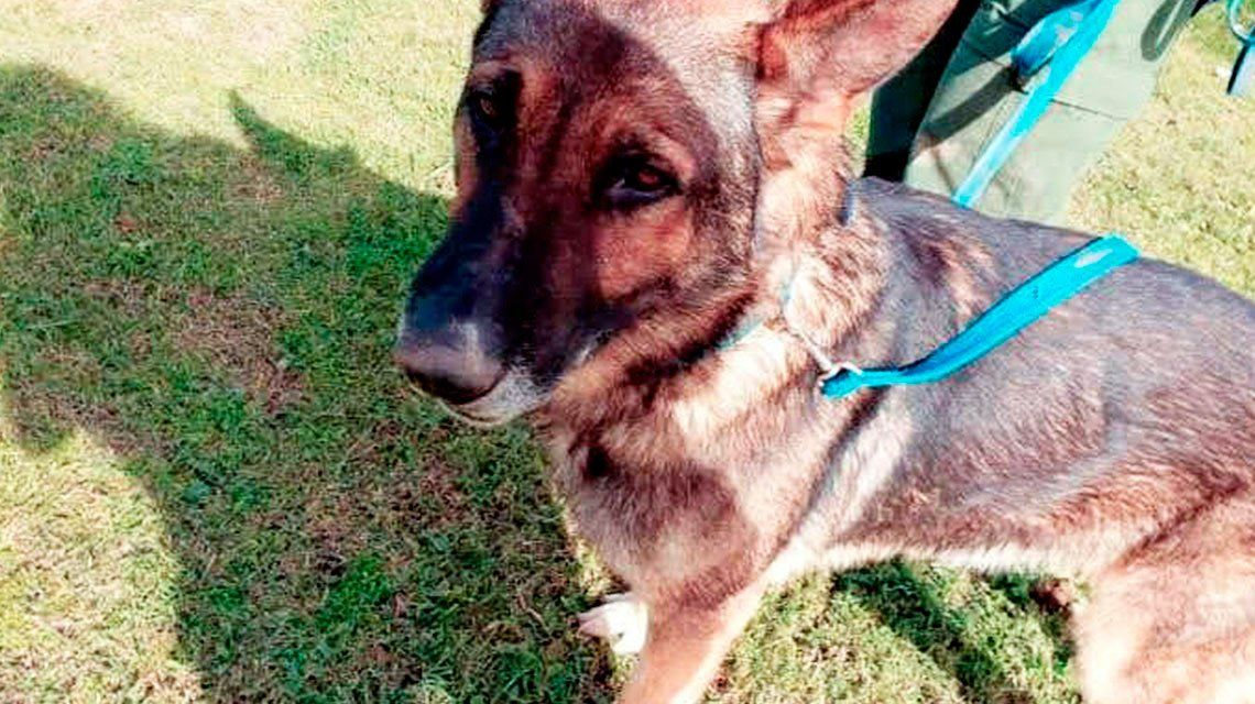 Buscan desesperadamente a un perro que se perdió luego de un rescate