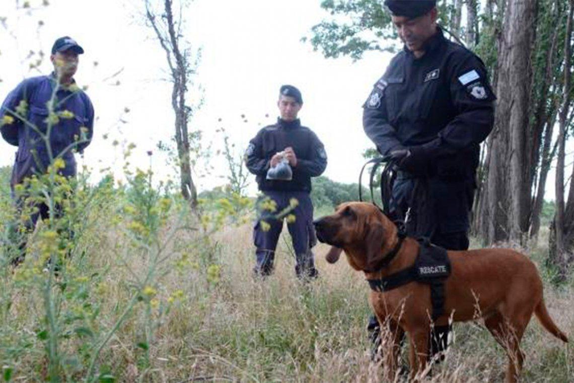 Perra policía resuelve dos crímenes gracias a su olfato
