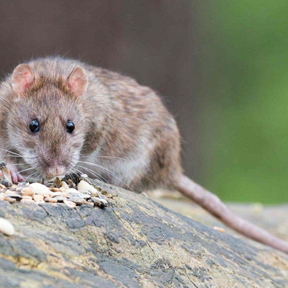 Ascienden a 23 los casos confirmados de hantavirus en Epuyén