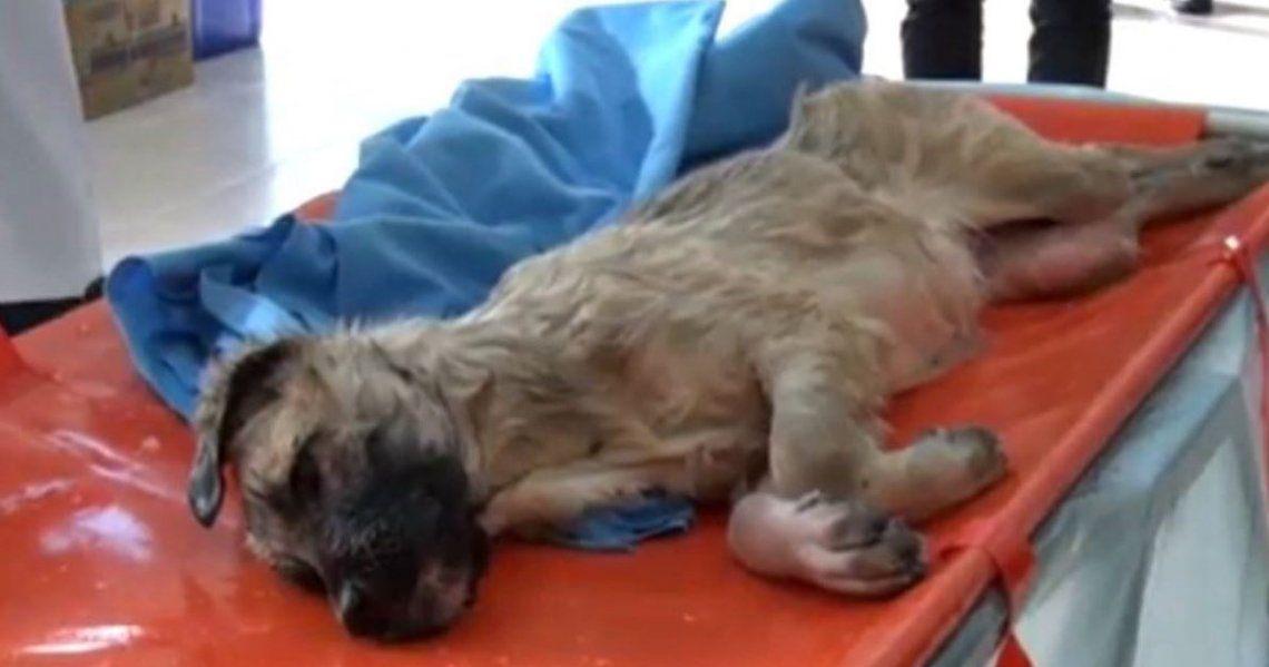 Video   El increíble rescate de un perro atrapado en un lago congelado