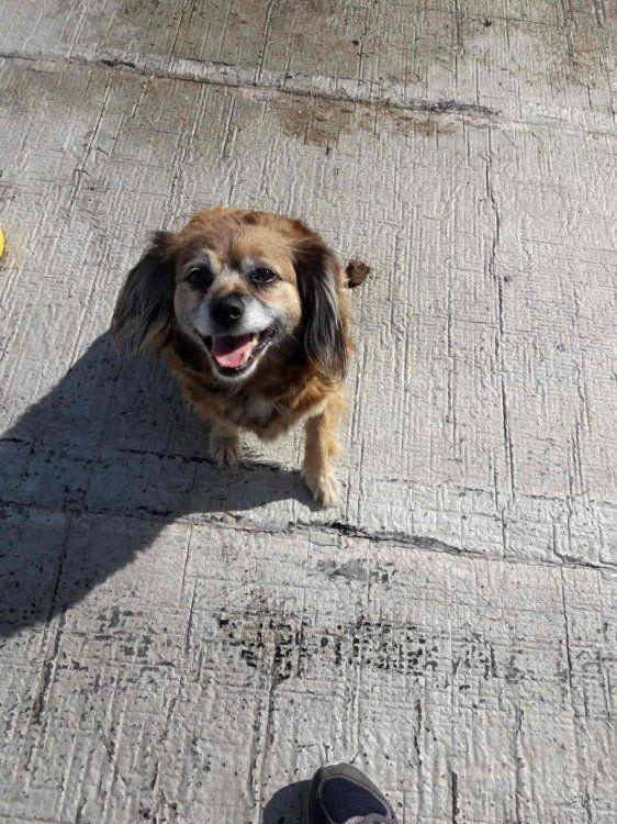 Flopy, una perra chiquita que busca amor