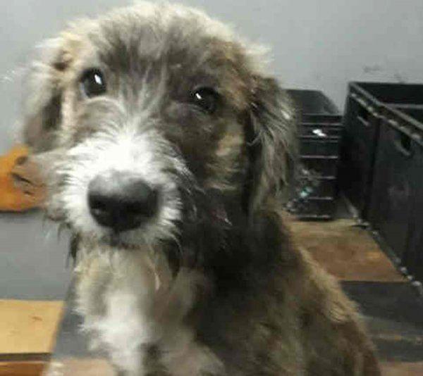 Rocco, un cachorrito cariñoso y juguetón