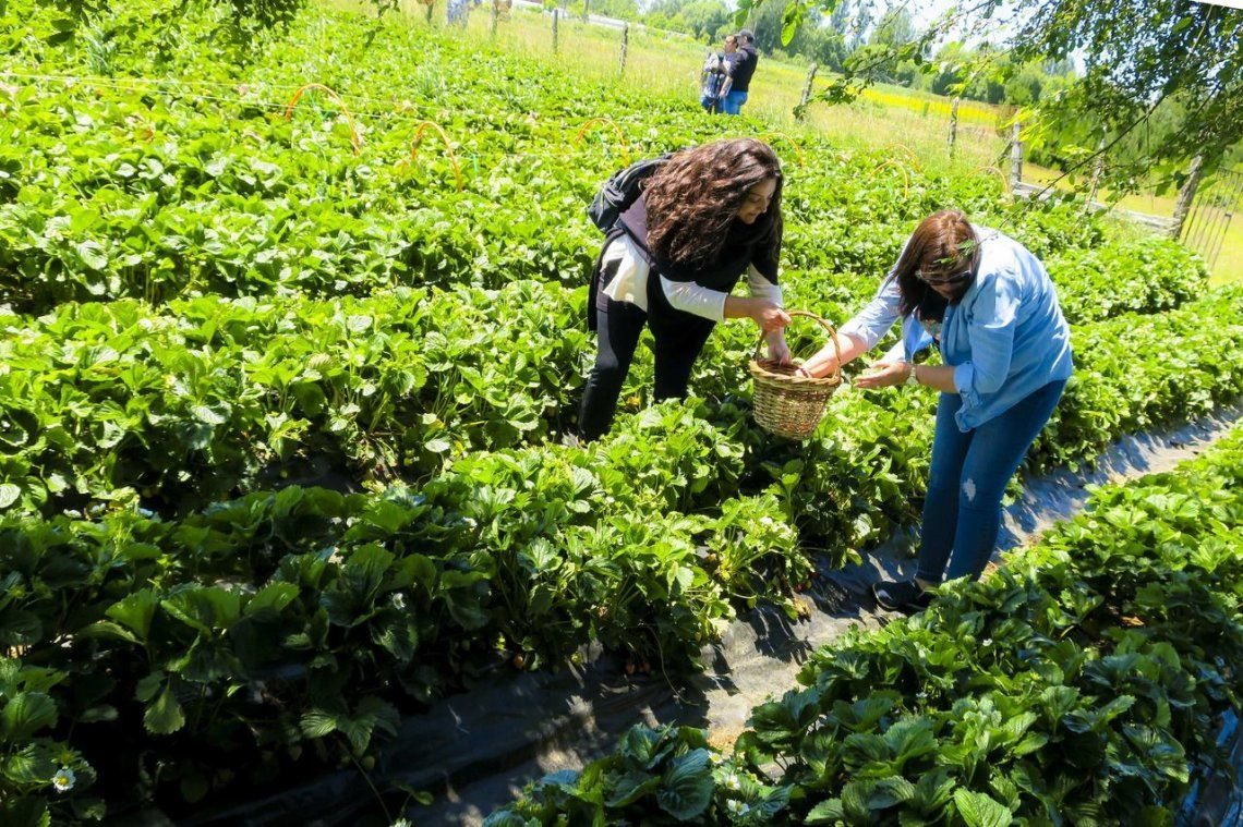 Buscan que los inmigrantes se radiquen en provincias con demanda laboral