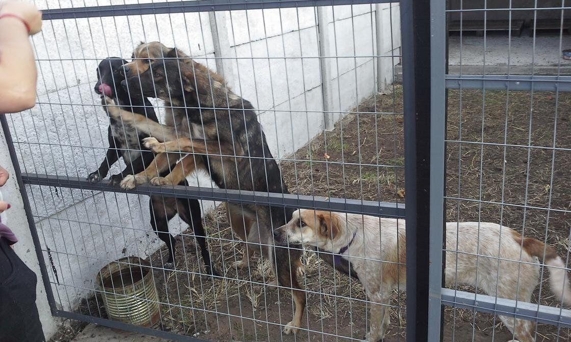 Brutal ataque a una ONG protectora de animales: siete perros muertos