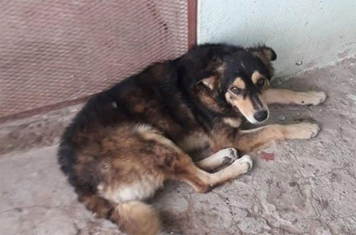 Quilmes: apareció Rayito, el perro del video viralizado