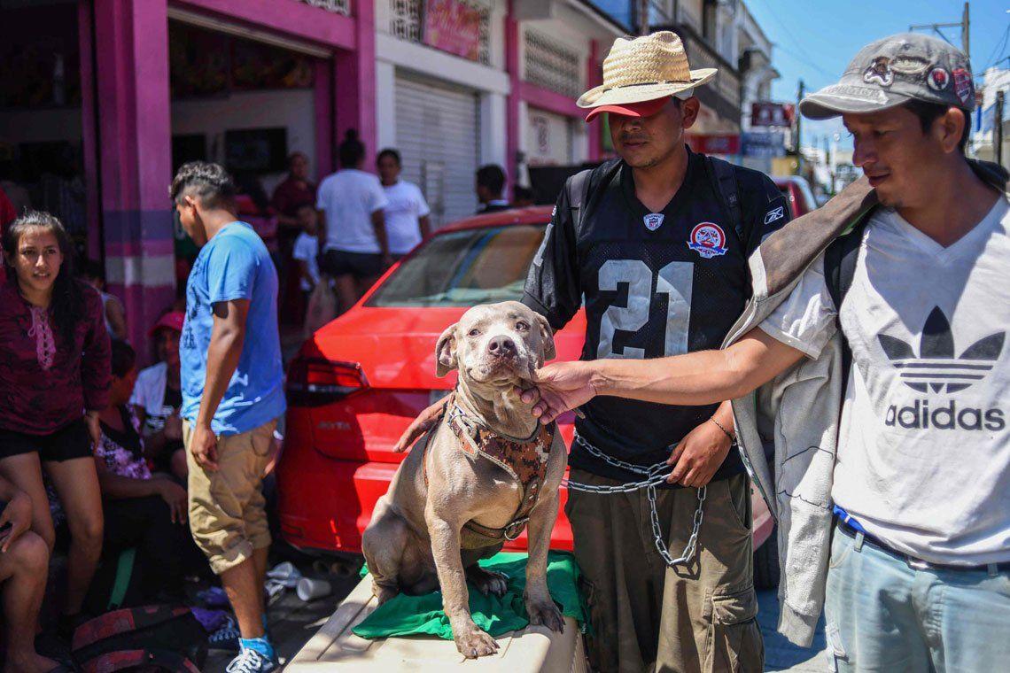 Un perro que busca  su lugar en el mundo
