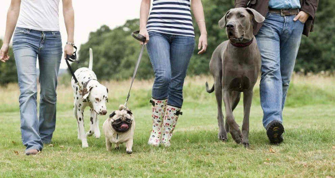 Que el paseo de la mascota no tenga ningún sobresalto