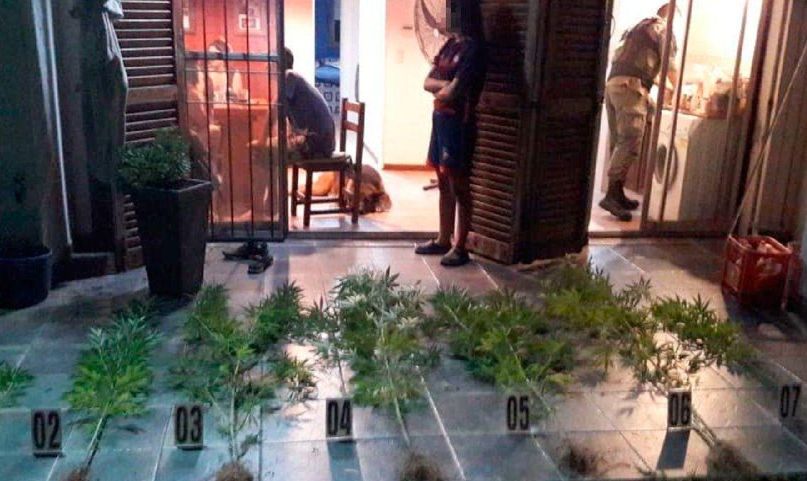 Detienen a cultivadores de marihuana gourmet