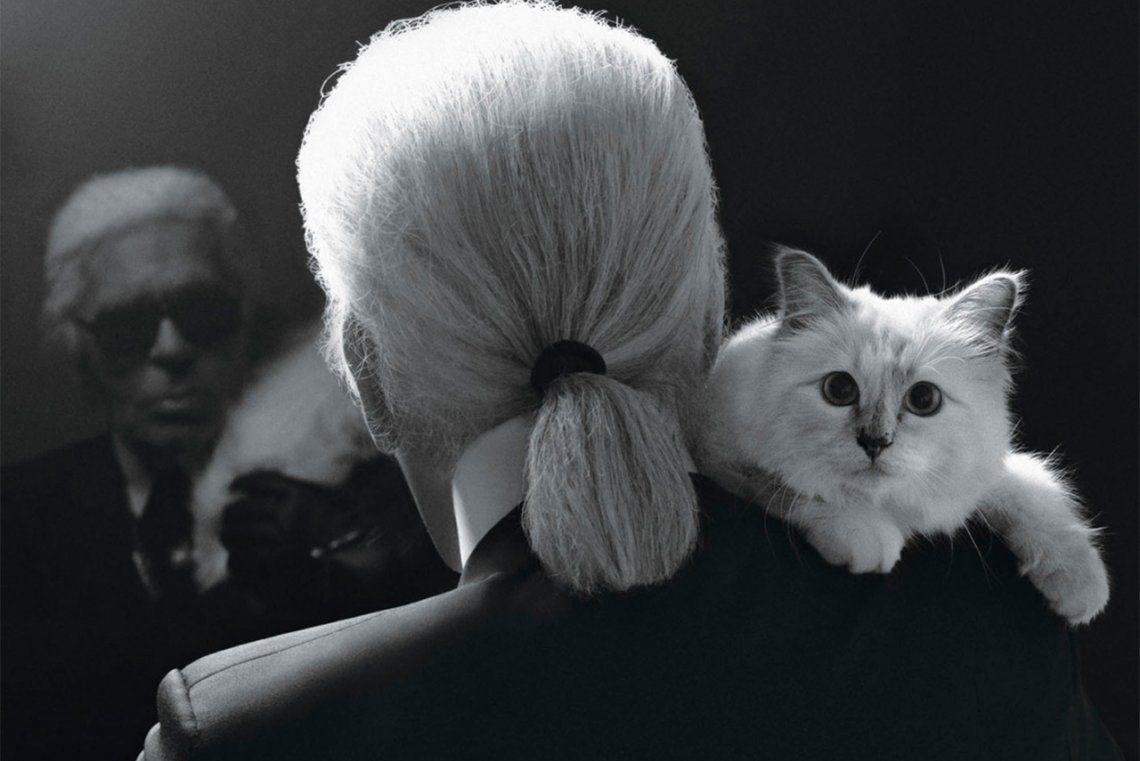 Choupette: gata tan famosa como su amo