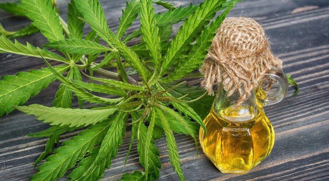 Berazategui: el Concejo Deliberante aprobó el  uso de cannabis medicinal