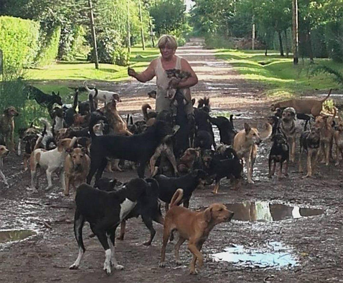 Berazategui: dos mujeres quedaron en la calle con sus 117 perros y 20 gatos
