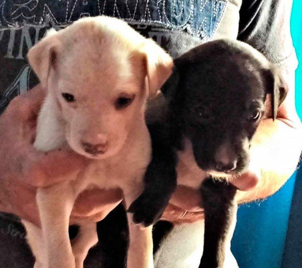 Dos cachorros rescatados del abandono buscan casa