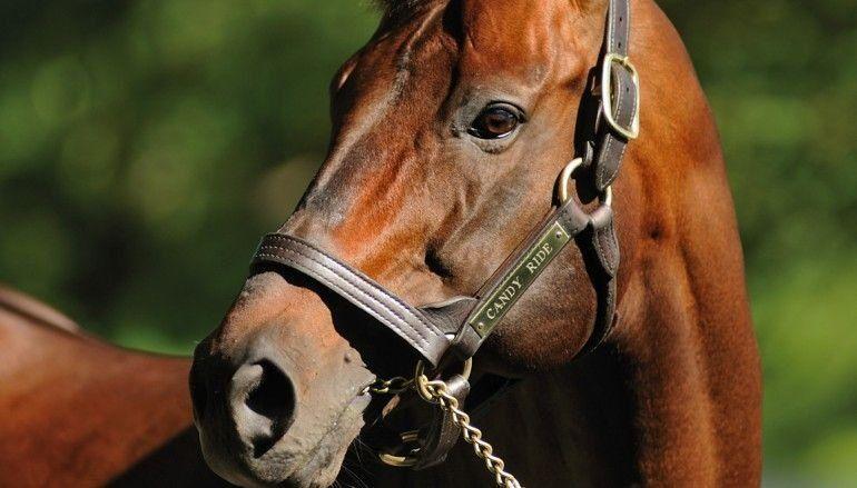 Por la suba de la carne vacuna crece el robo de caballos para faenar y hacer empanadas