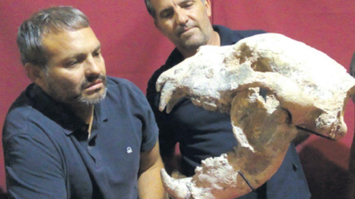 Hallan restos de oso gigante de 700 mil años