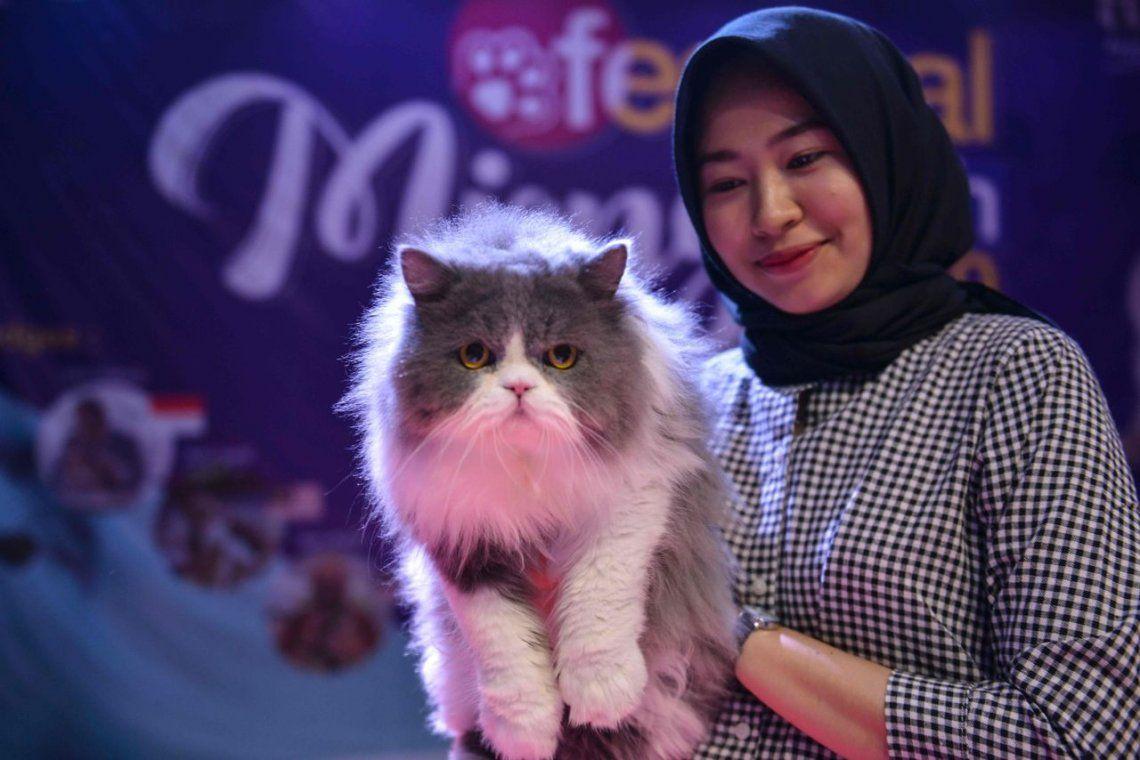 Las fotos del concurso que premia a los gatos más lindos