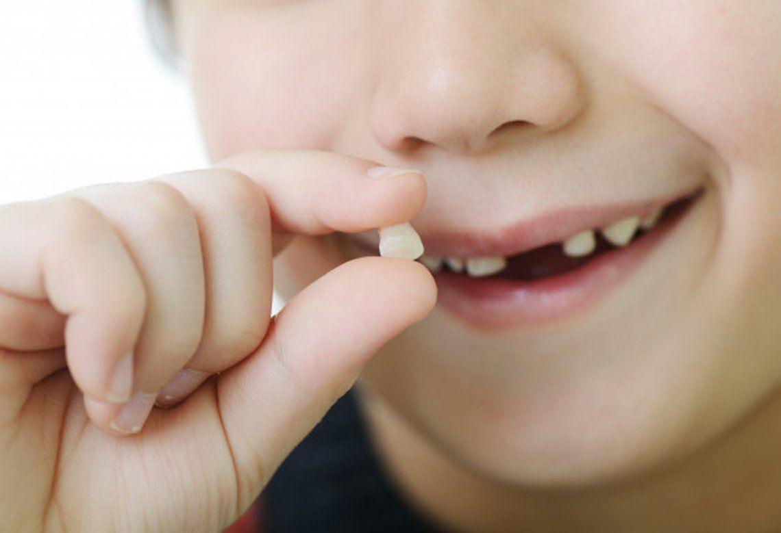 Aseguran que los dientes de leche pueden salvar vidas