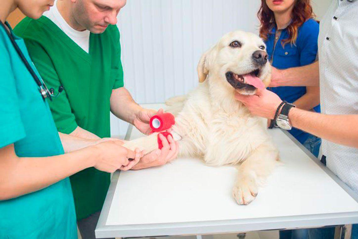 Veterinarias y el buen trato a las mascotas
