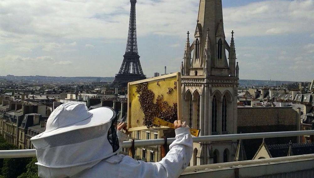 Notre Dame: las 200.000 abejas de la Catedral se salvaron del incendio