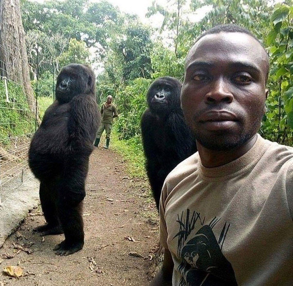 Las increíbles selfies de un guardaparque con gorilas que posan como humanos