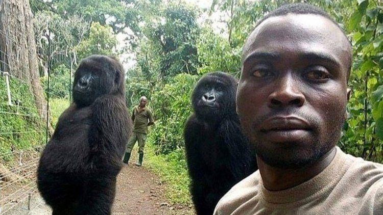 Las fantásticas selfies de un guardaparque con gorilas