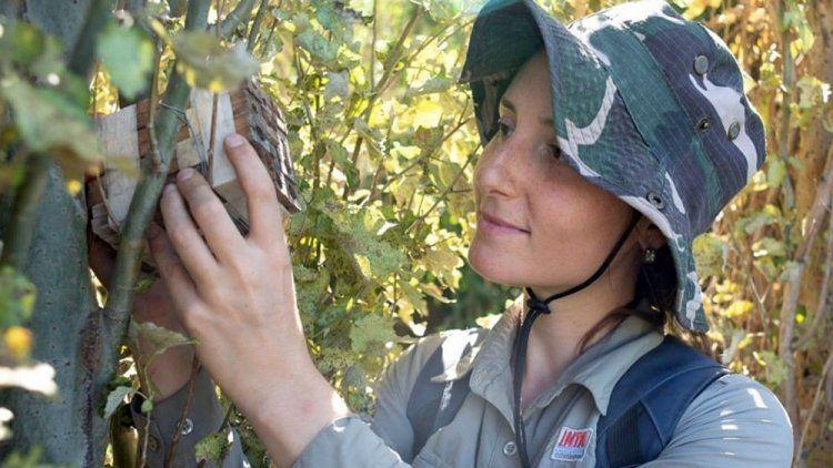 San Luis: investigadores descubren el primer nido de abejas de plástico