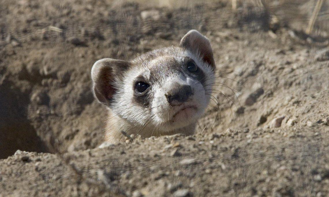 Día del animal: 5 especies que no deberías tener en tu casa
