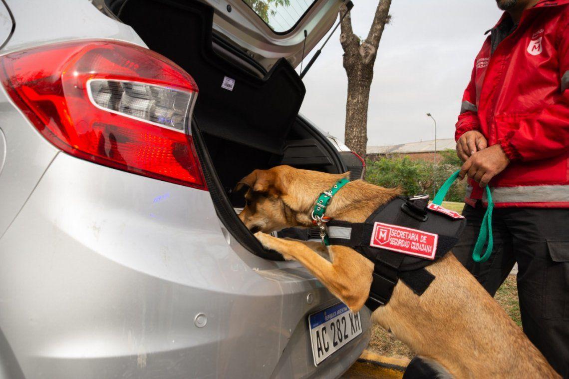 Morón sumó una unidad canina para detectar drogas y explosivos