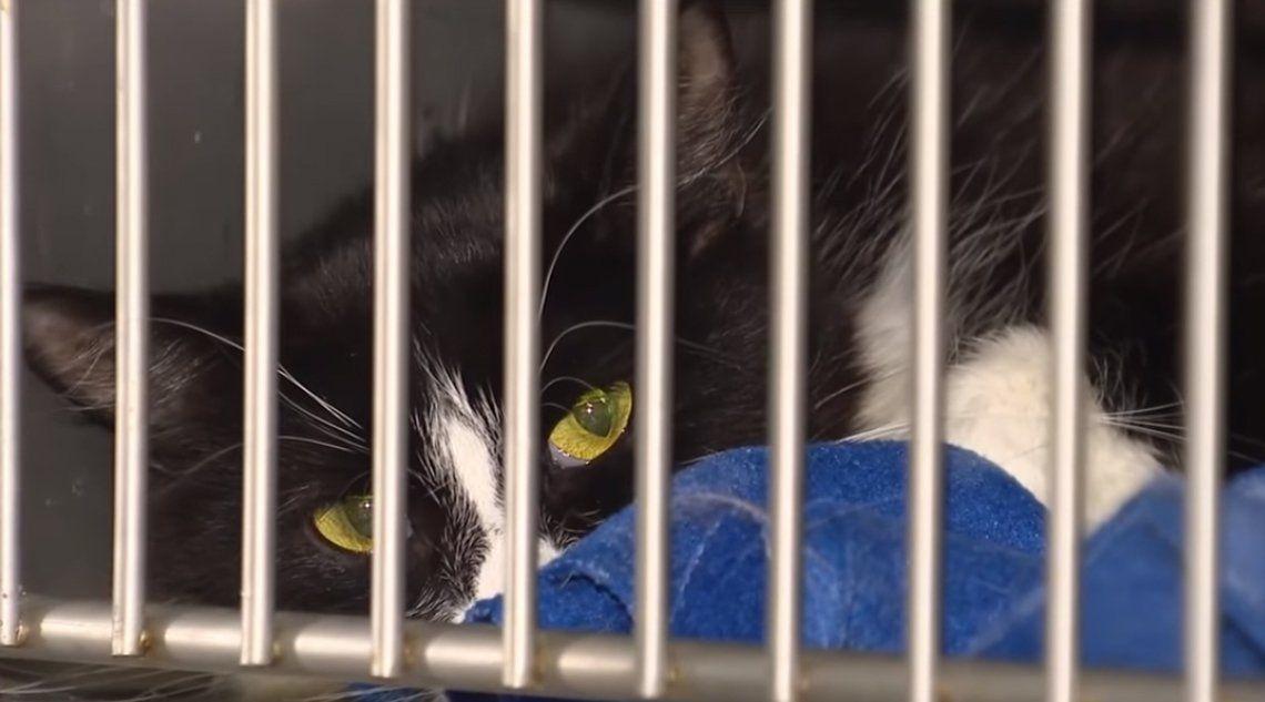 Encuentran más de 300 gatos encerrados en un departamento