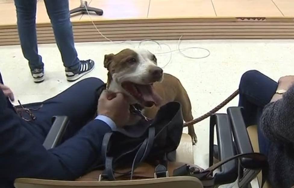Una juez lleva como testigo a una perra en un juicio por maltrato animal