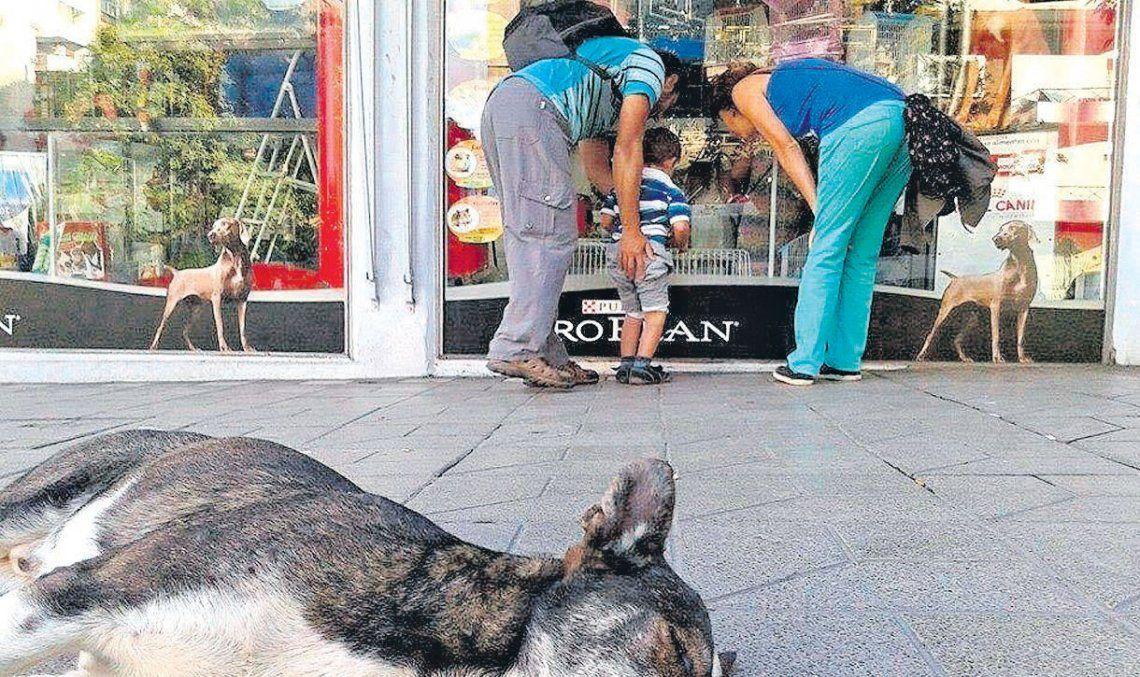 Tres de Febrero: prohíben las vidrieras donde se exhiban animales
