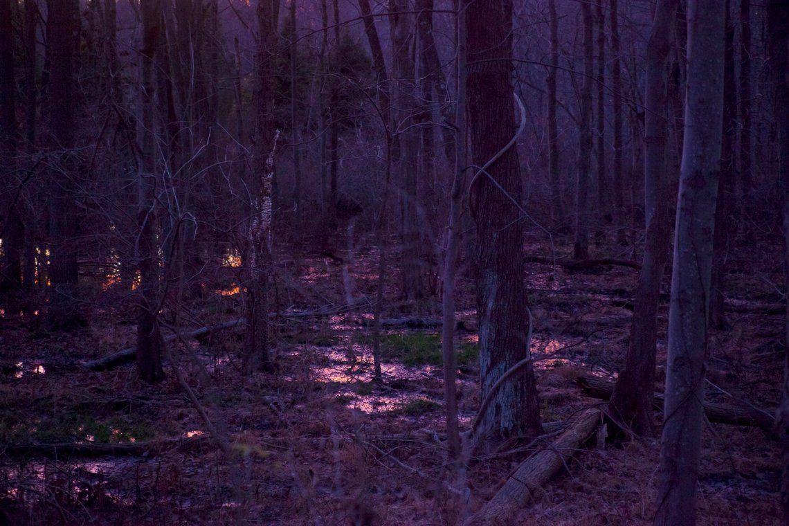Magic Forest -Art on a Postcard
