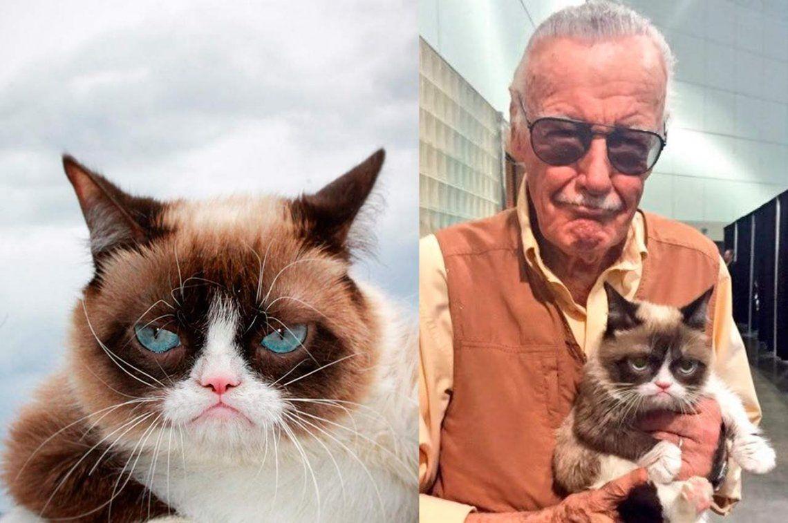 Murió Grumpy Cat, la gata más famosa de Instagram