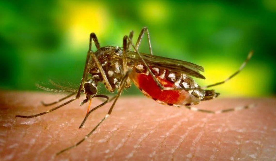La OMS certificó que Argentina eliminó el paludismo