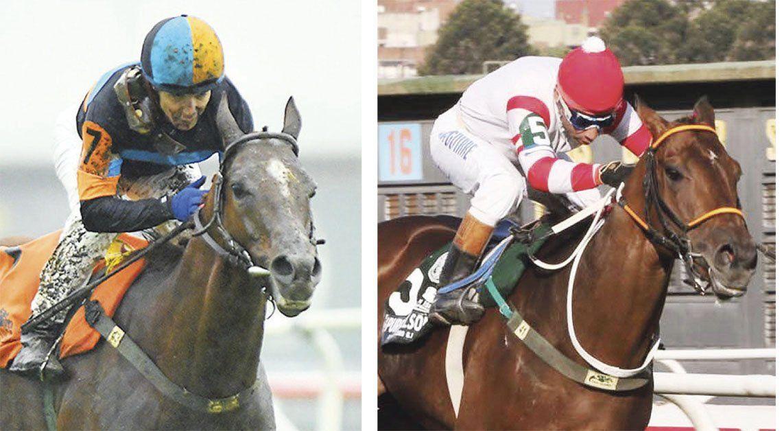 Coronavirus: Podrían sacrificar caballos por falta de carreras