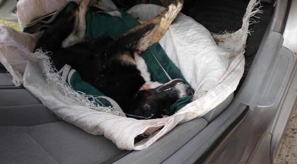 Este animal murió a causa de los disparos realizados.