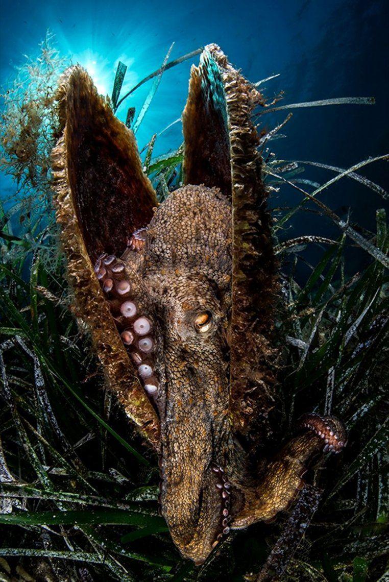 Finalista categoría Aquatic life:New House | Filippo Borghi