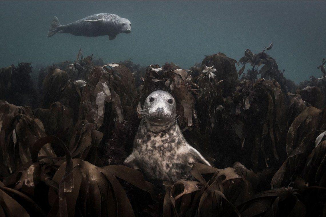 Finalista categoría Aquatic Life:Throne of Kelp |Ellen Sophie Cuylaerts