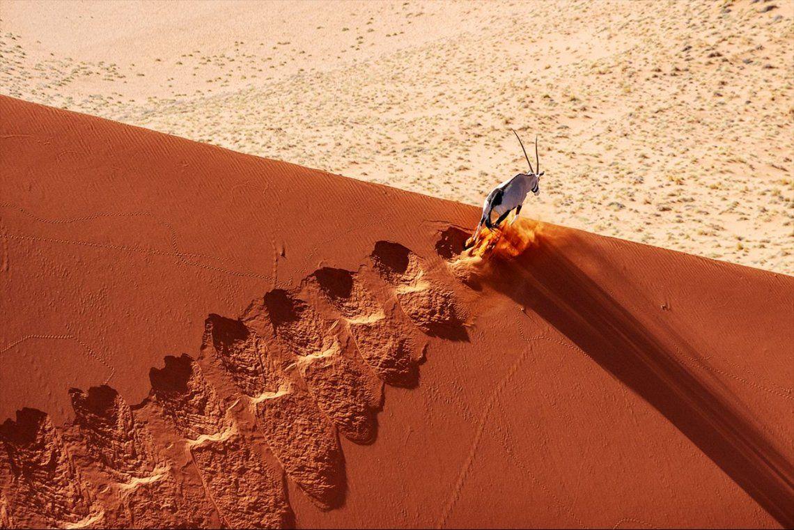 Finalista categoríaTerrestrial Wildlife:Traveling to the Edge |Prince (Buddy) Eleazer