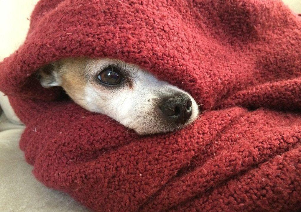 La llegada de los días fríos también puede complicar a las mascotas de la casa.
