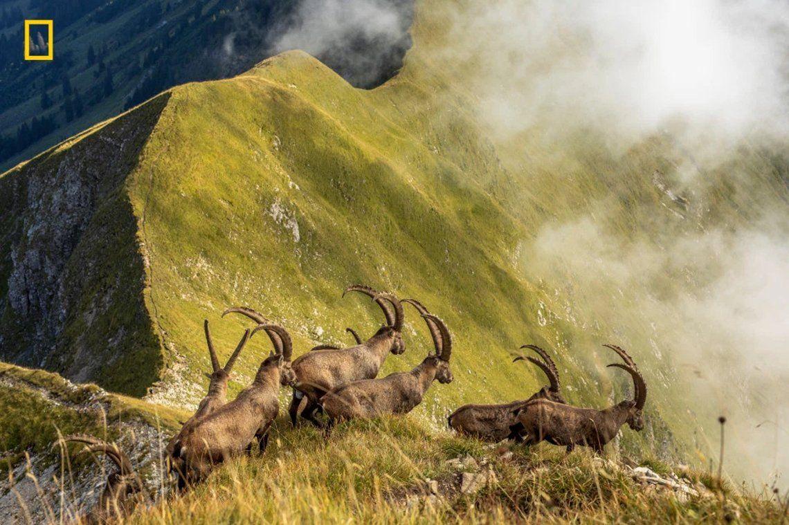 King of the Alps deJonas Schaefer