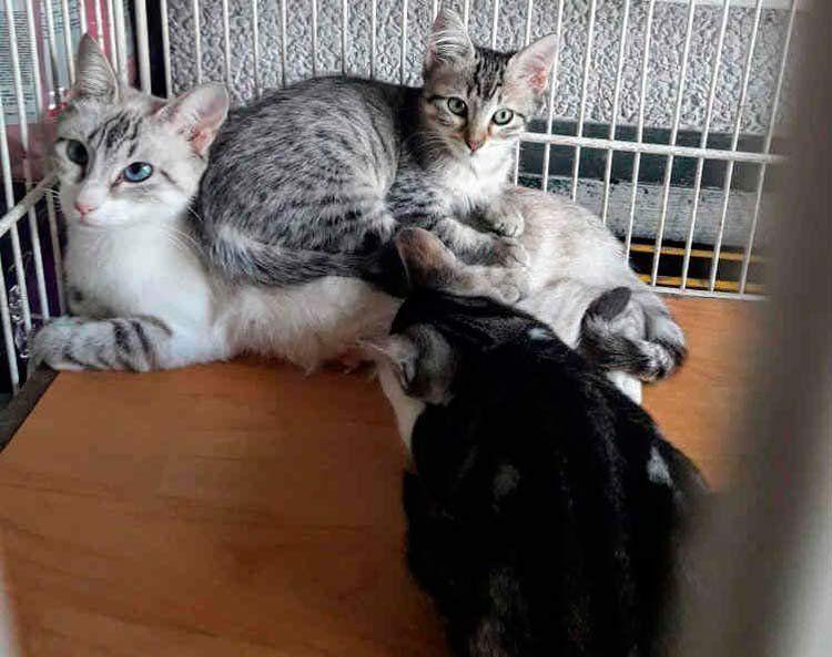 Una gatita y sus dos cachorros esperan un hogar