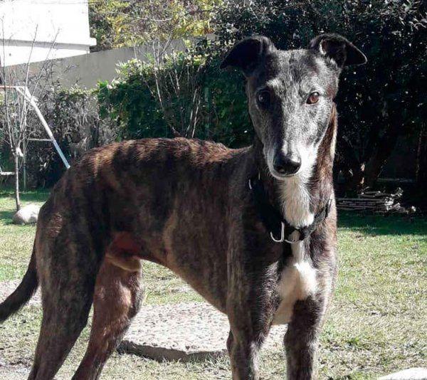 Roko, un perro muy compañero y cariñoso
