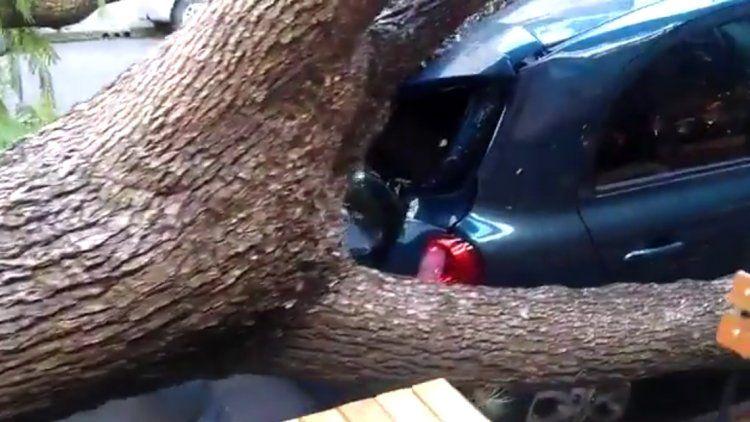 Belgrano: un árbol seco cayó sobre tres autos estacionados